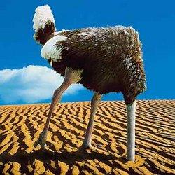 Ostrichhead_in_sand
